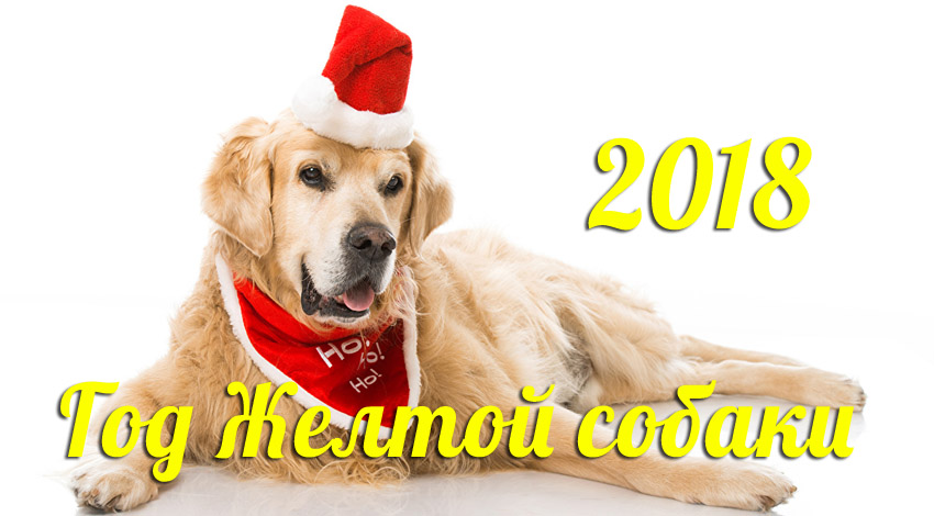 2018 год цвет собаки
